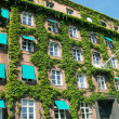 Ivy covered building 02 — Stock fotografie #2302983