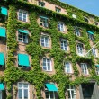 Ivy covered building 02 — Stock Photo