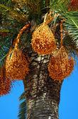 Greek palm tree — Stock Photo