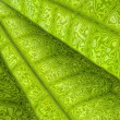 Leafy background — Stock Photo