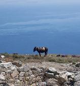 Donkey on mountain — Stock Photo