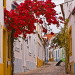 Stock Photo: Portuguese Back Street