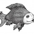 Fish Drawing — Stock Photo