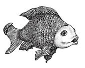 Fish Drawing — Stock Photo