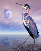 Heron — Stock Photo