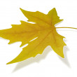 Yellow maple leaf — Stock Photo