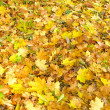 Stock Photo: Foliage