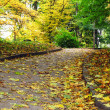 Autumnal road — Stock Photo
