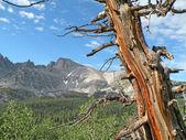 Mountains in Nevada — Stock Photo