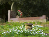 Churchyard — Stock Photo