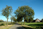 Lane with trees — Stock Photo