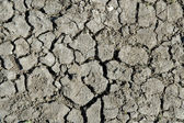 Dryness ground in the summer — Stock Photo