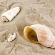 Shells with footprints — Stock Photo