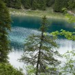 Stock Photo: Conifer in front of blue lake