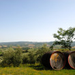 Barrels for Chianti wine — Stock Photo #2329845