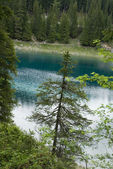 Conifer in front of blue lake — Stock Photo