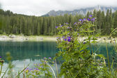 Geranium by lake in mountains — Stock Photo
