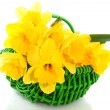 Royalty-Free Stock Photo: Basket with daffodils