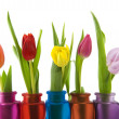 Colors in spring — Stock Photo #2428958