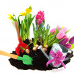 Gardening in spring — Stock Photo #2429383