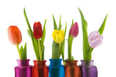Colors in spring — Stock Photo