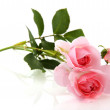 Pink roses — Stock Photo #2430057