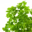 Parsley — Stock Photo #2444585