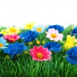 Foto Stock: Green grass with colorful flowers