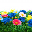 Foto de Stock  : Green grass with colorful flowers