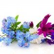 Summer flowers — Stock Photo