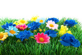 Green grass with colorful flowers — Stock Photo