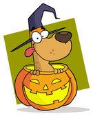 Cartoon character halloween dog — Stock Photo