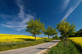 Road through a field of rape — Stock Photo