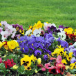Rainbaw flowerbed — Stock Photo