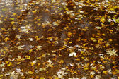 Yellow maple leaves in a puddle — Stock Photo