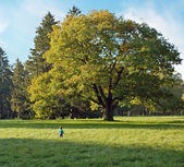 Boy and magic oak — Stock Photo