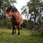 Horses — Stock Photo #2220133