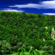 Panorama photo of forest in sunny day. — Stock Photo