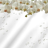 Scattered orchids — Stock Photo