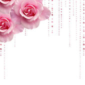 Pink roses with jewel droplets — Stock Photo