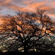 Sunset Behind the Tree — Stock Photo