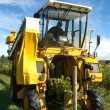 Stock Photo: Grape Harvester