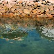 Reflections in the Water — Stock Photo