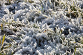 Winter Frost — Stock Photo