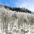 Trees in Snow — Stock Photo #2243666