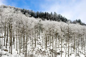 Trees in the Snow — 图库照片