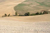 Undulating fields in Tuscany, Italy — Stock Photo