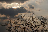 Radiant sun, heavy clouds, tree — Stock Photo