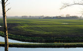 Polder view in Sluis, the Netherlands — Stock Photo