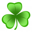 Shamrock — Stock Photo